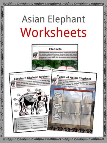 Asian Elephant Worksheets
