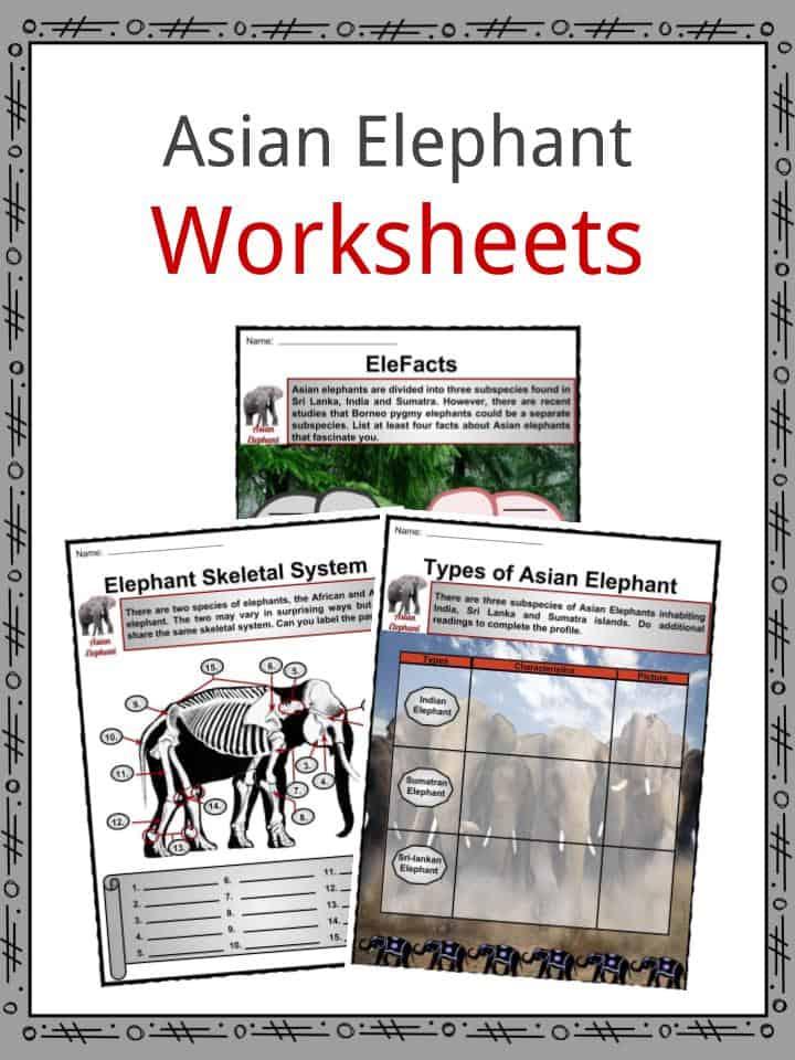 Asian Elephant Worksheets