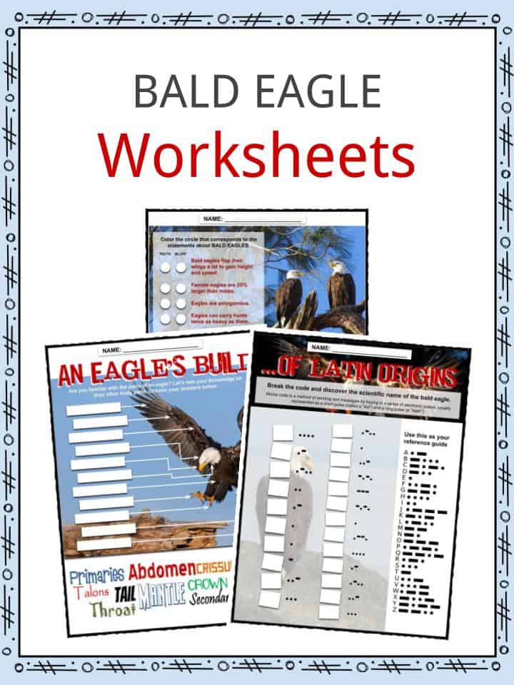 BALD EAGLE Worksheets