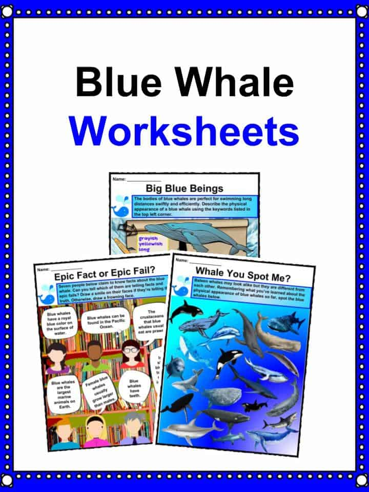Blue Whale Facts, Worksheets, Habitat, Diet & Information