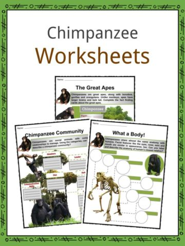 Chimpanzees Worksheets