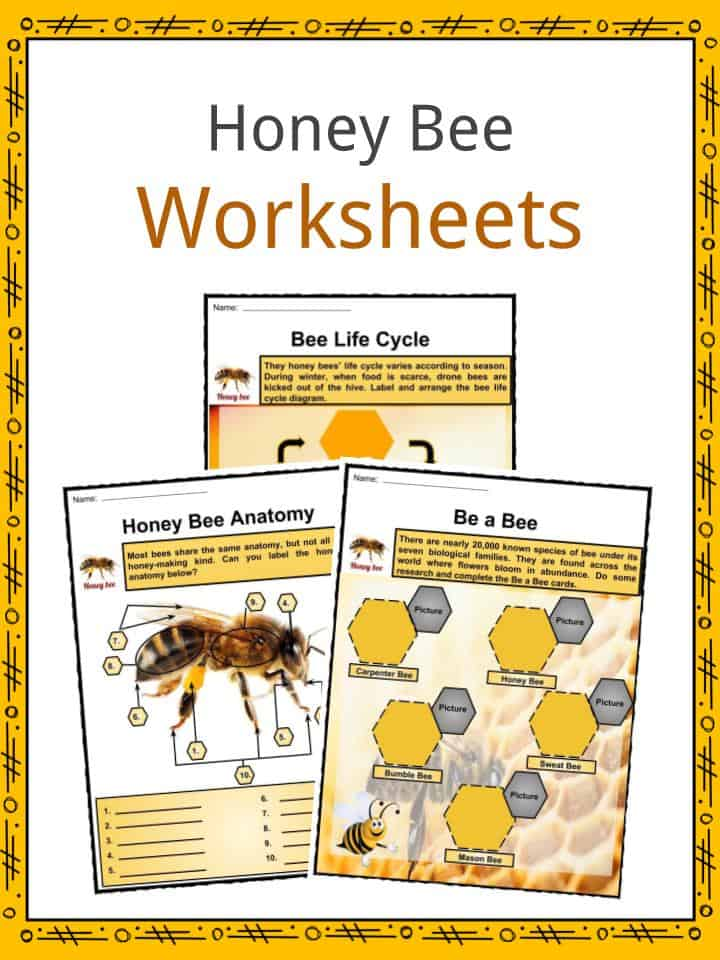 Honey Bee Worksheets