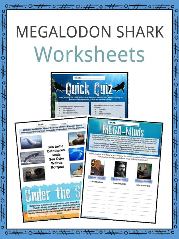 MEGALODON SHARK Worksheets
