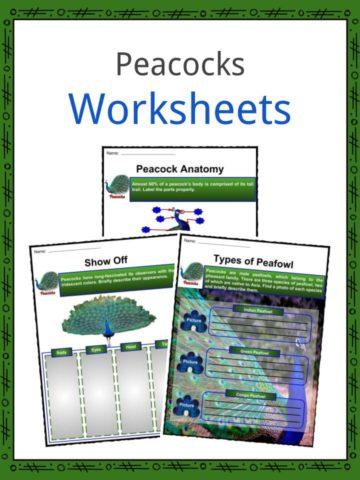Peacocks Worksheets