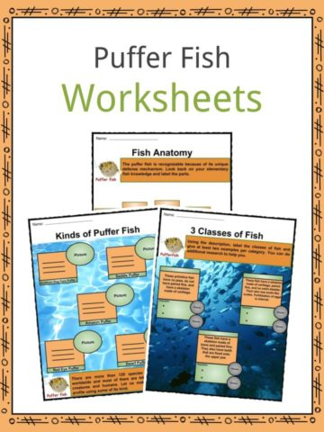 Puffer Fish Worksheets