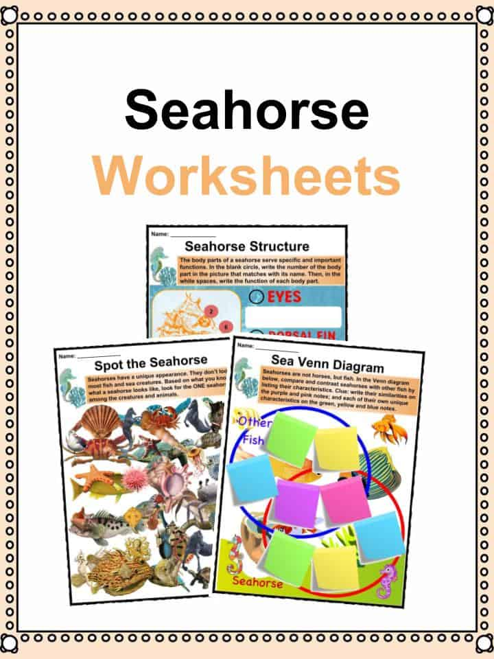 seahorse facts worksheets types habitat for kids