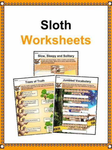 Sloth Worksheets