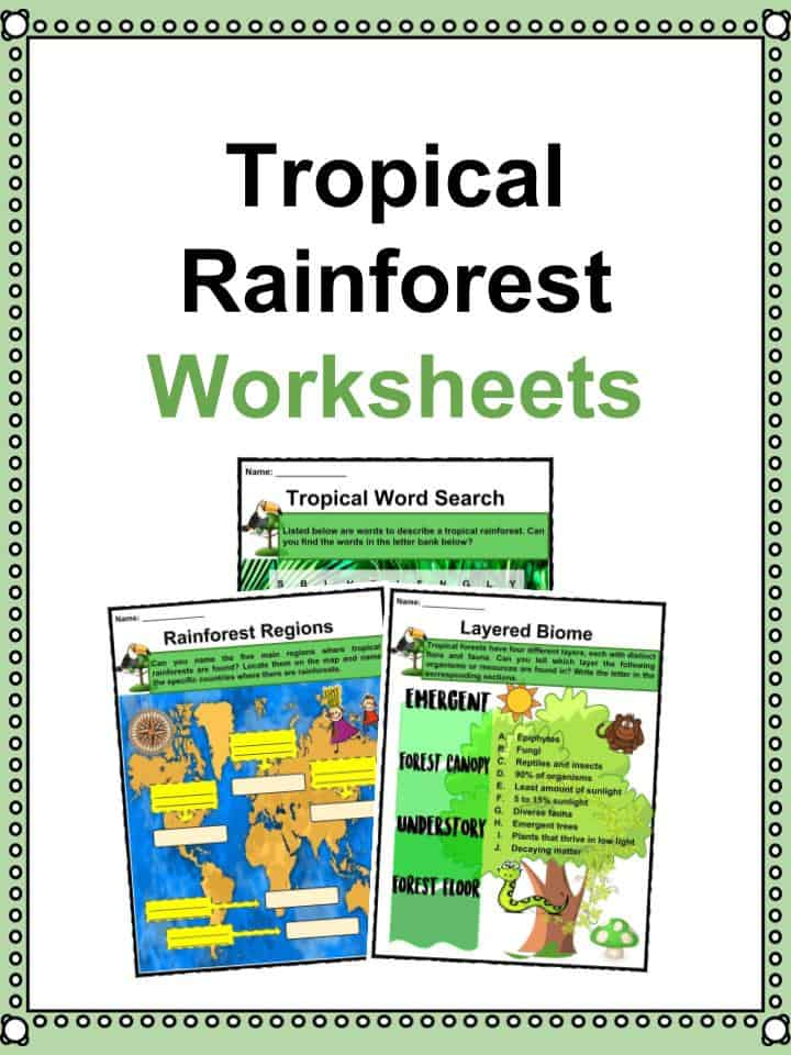 picture relating to Biodiversity Printable Worksheets identified as Tropical Rainforest Data, Worksheets, Functions