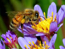 honey-bee-facts