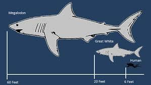 megalodon-shark-facts