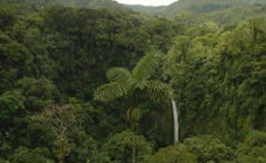 tropical-rainforest-facts