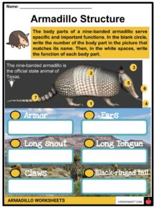 Armadillo Facts, Worksheets, Habitat, Species & Diet For Kids