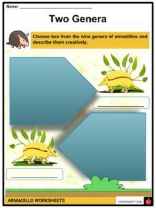 Armadillo Facts, Worksheets, Habitat, Species & Diet For Kids