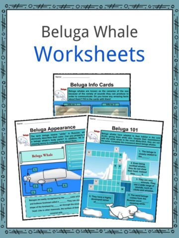 Beluga Whale Worksheets