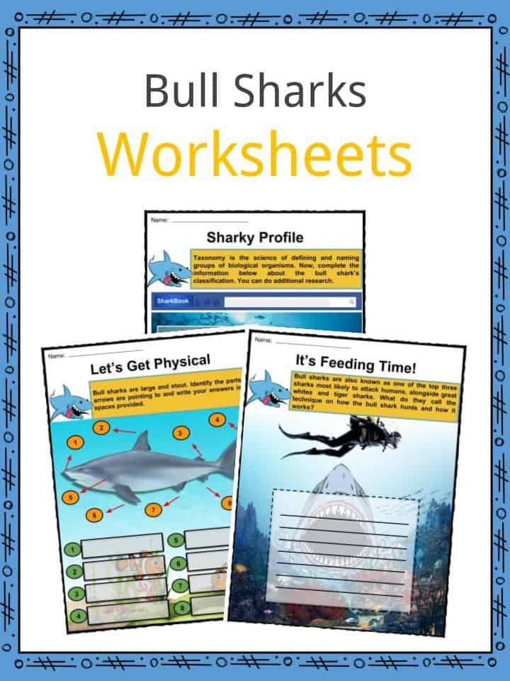 Bull Shark Facts, Worksheets, Habitat, Species & Diet For Kids