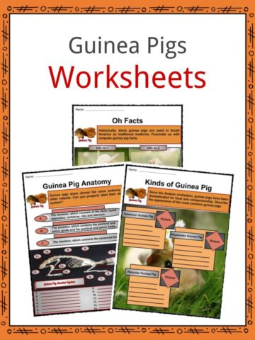 Guinea Pigs Worksheets