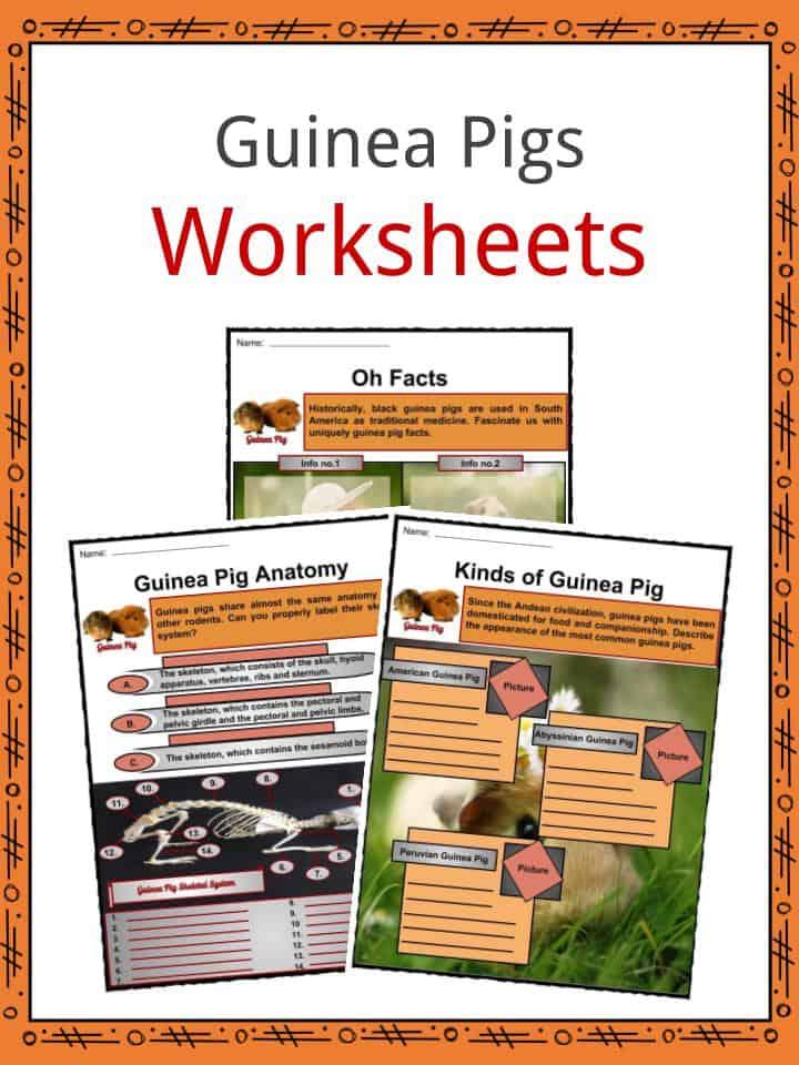 Guinea Pigs Worksheets