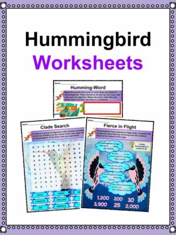 Hummingbird Worksheets