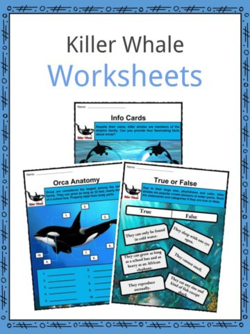 Killer Whale Worksheets