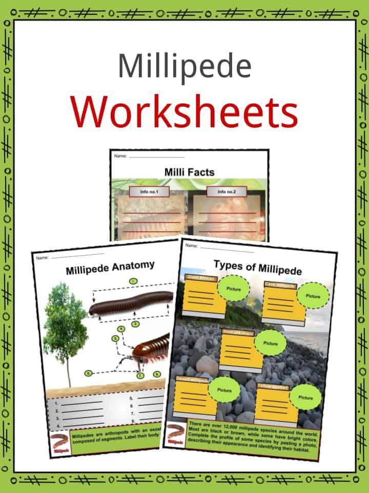 Millipede Worksheets