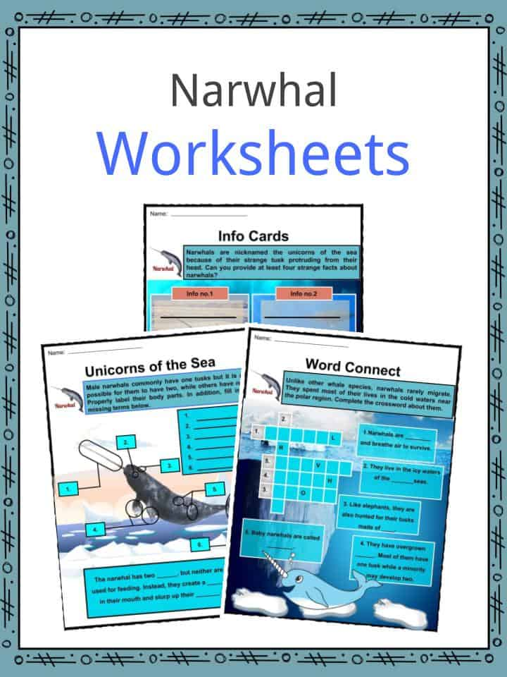Narwhal Worksheets