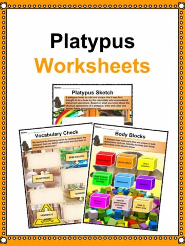 Platypus Worksheets