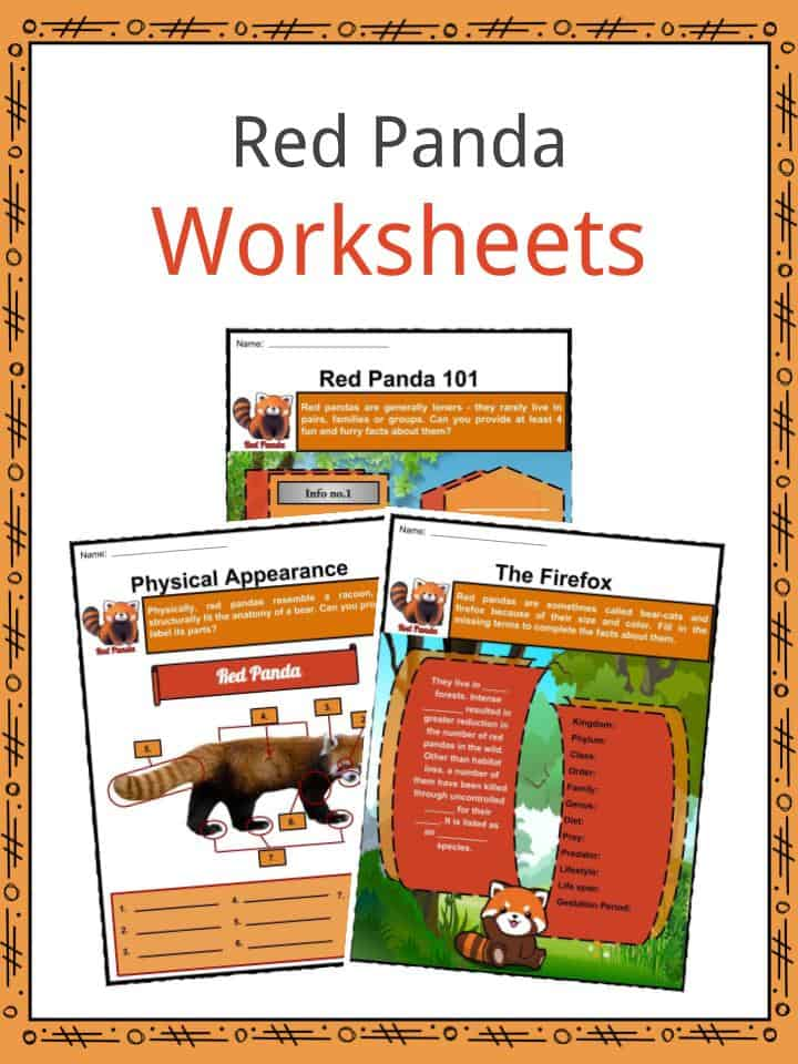 Red Panda Facts Worksheets Habitat Anatomy And Life Cycle For Kids