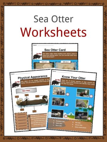 Sea Otter Worksheets