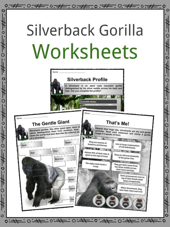 Silverback Gorilla Worksheets