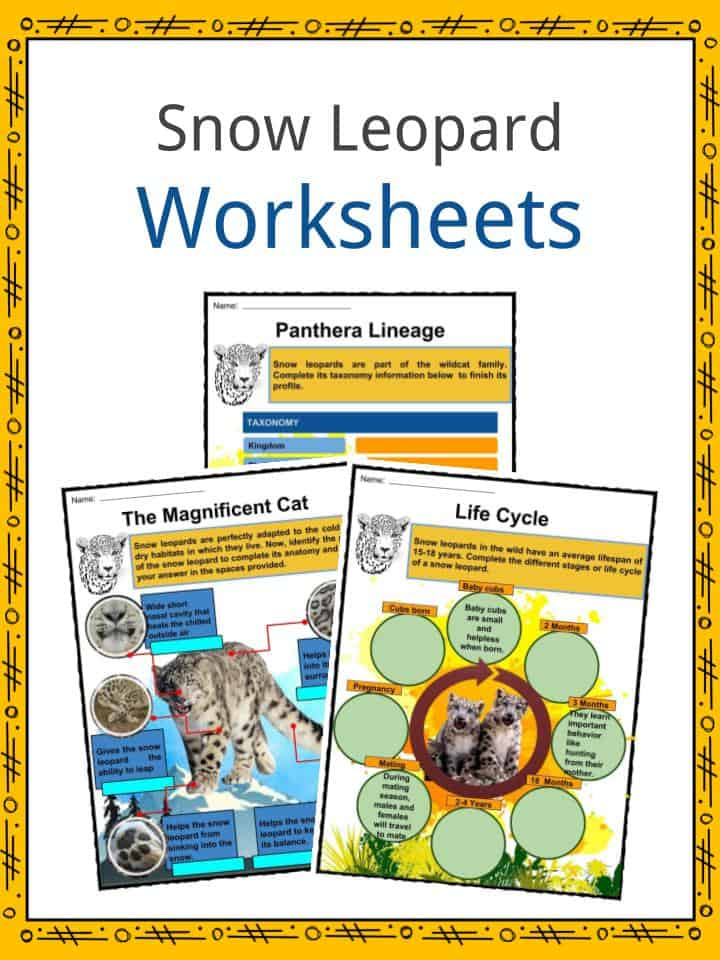 Snow Leopard Worksheets