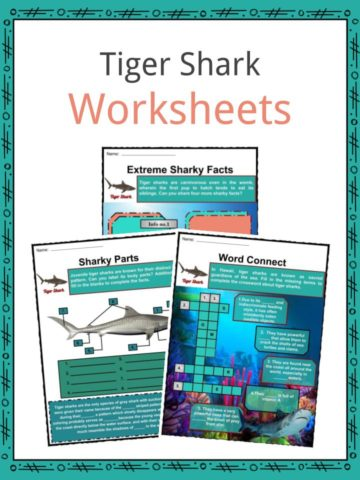 Tiger Shark Worksheets