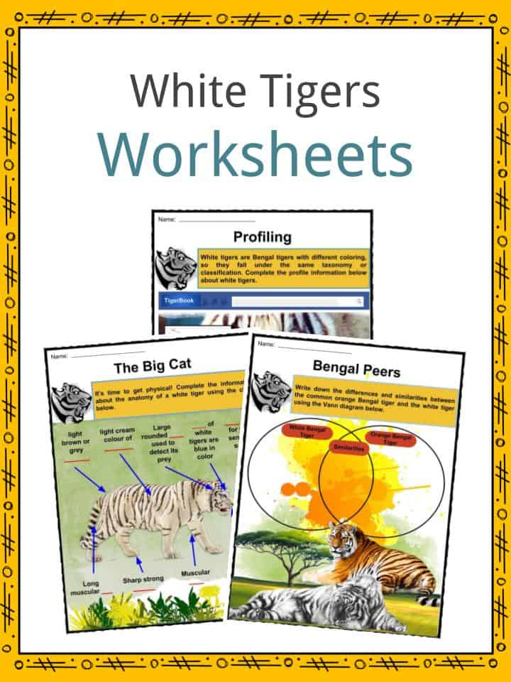 White Tigers Worksheets
