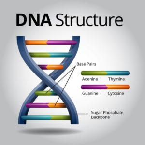 dna-and-inheritance-facts