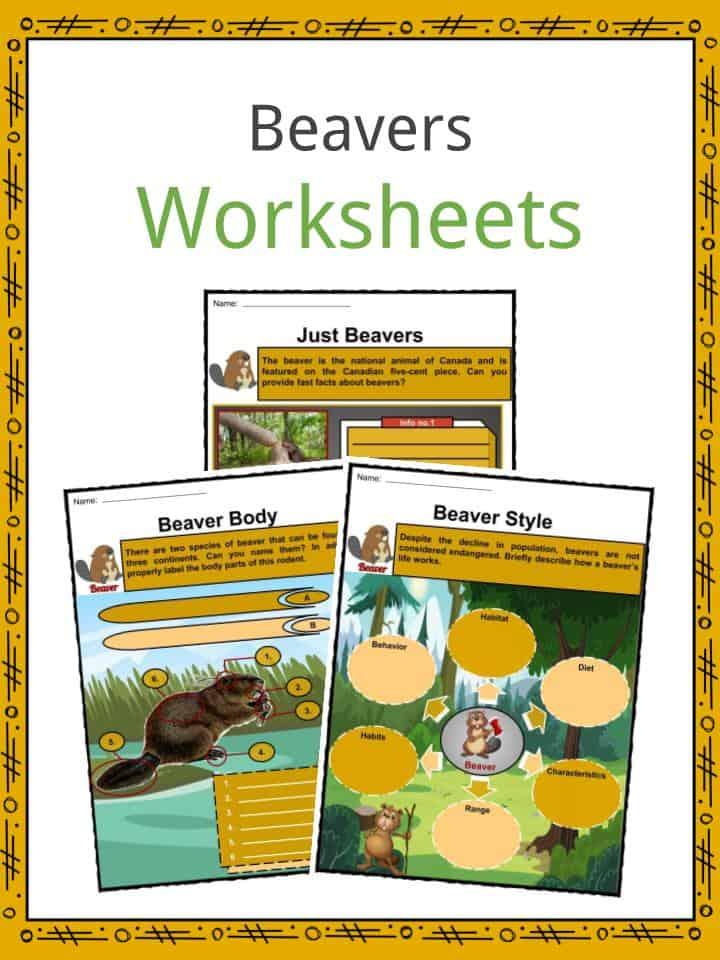 Beavers Worksheets