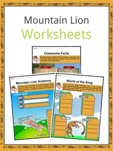 Mountain Lion Worksheets