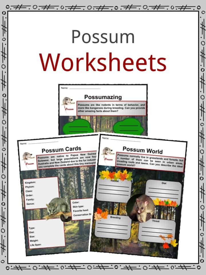 Possum Worksheets