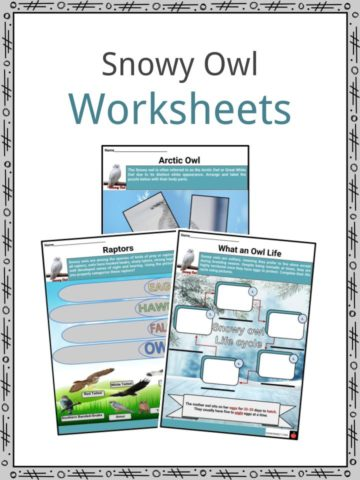 Snowy Owl Worksheet