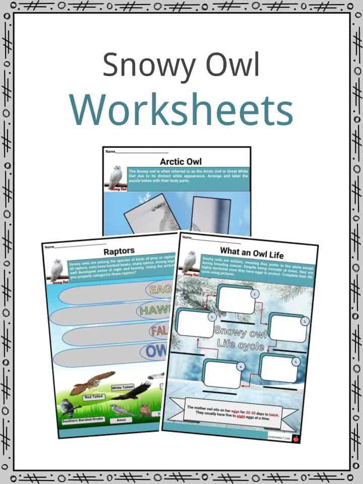 Snowy Owl Worksheet