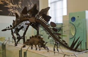 stegosaurus-facts