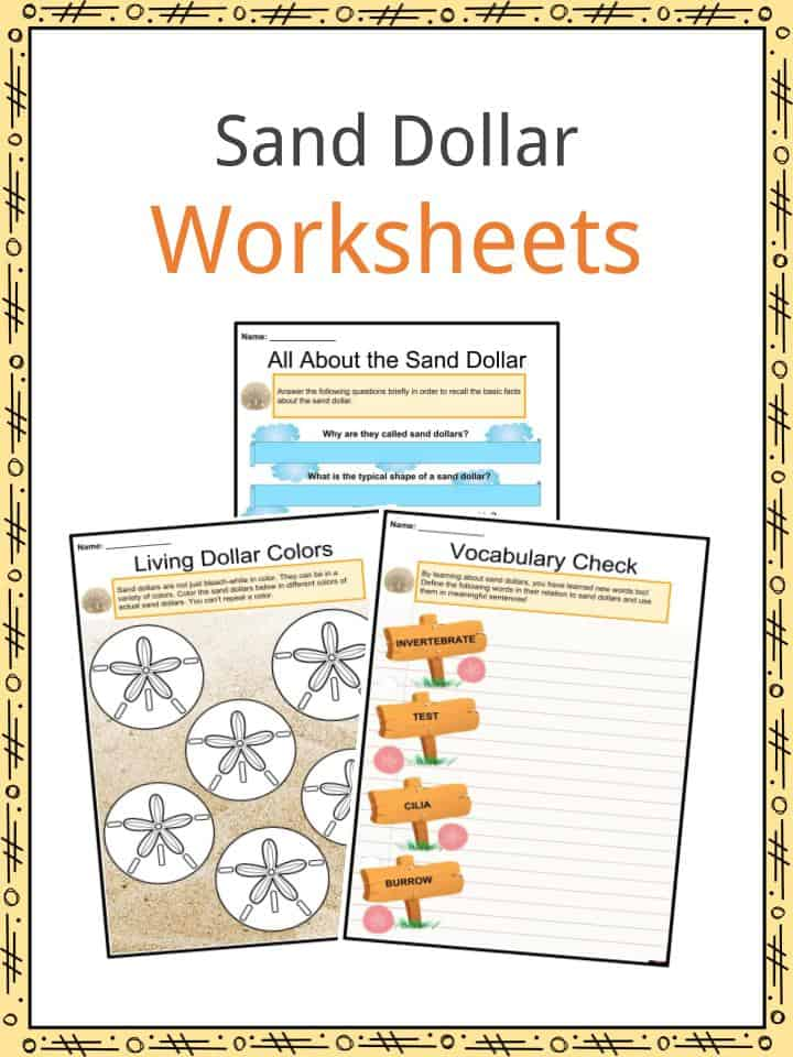 Sand Dollars Worksheets