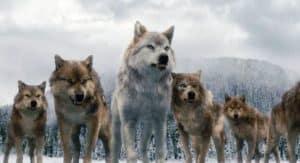 werewolf-facts