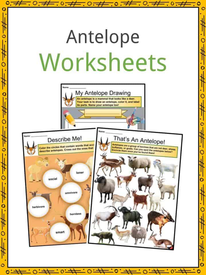 Antelope Worksheets