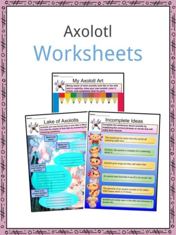 Axolotl Worksheets