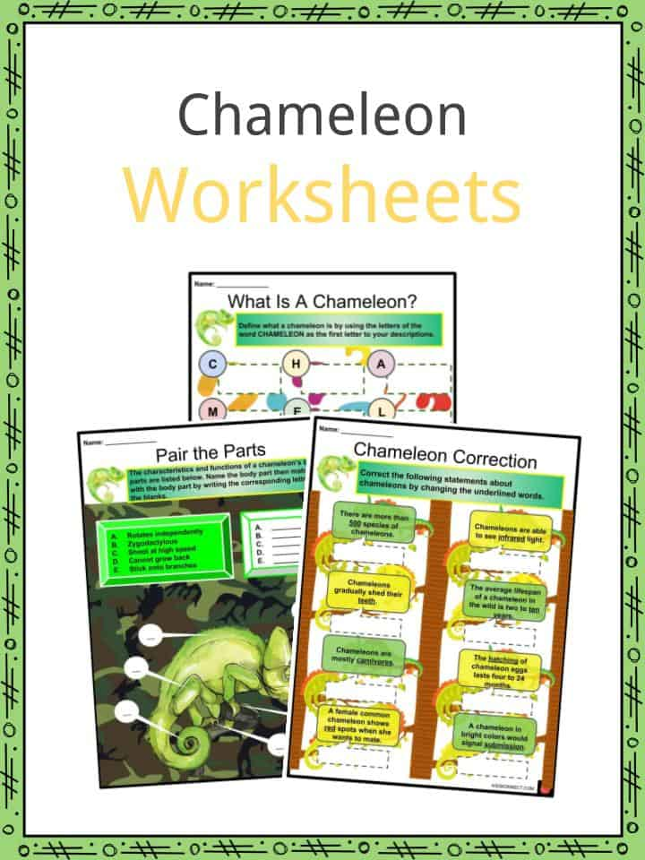 Chameleon Worksheets