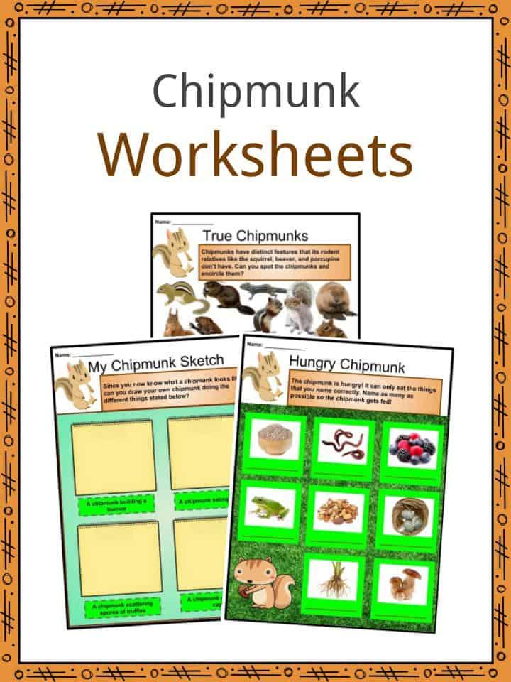 Chipmunk Worksheets