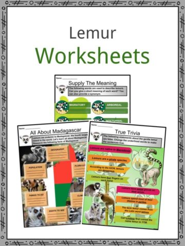 Lemur Worksheets