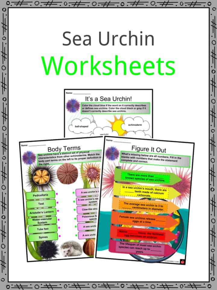 Sea Urchin Worksheets