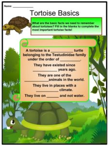 Tortoise Facts, Worksheets, Species, History