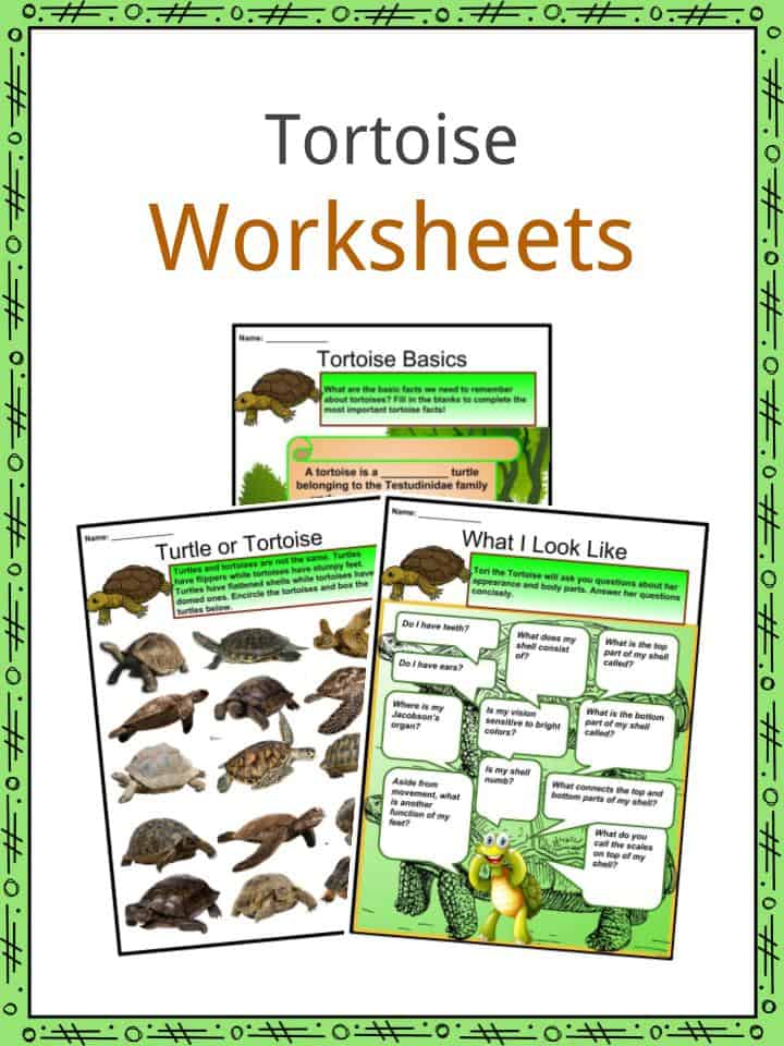 Tortoise Worksheets