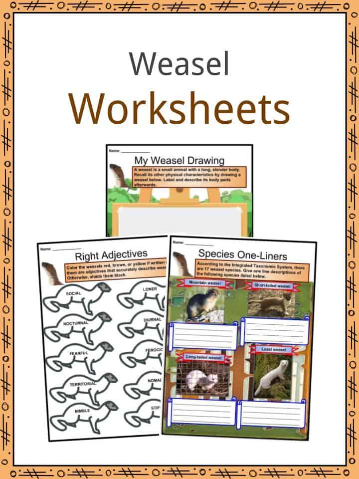 Weasel Worksheets